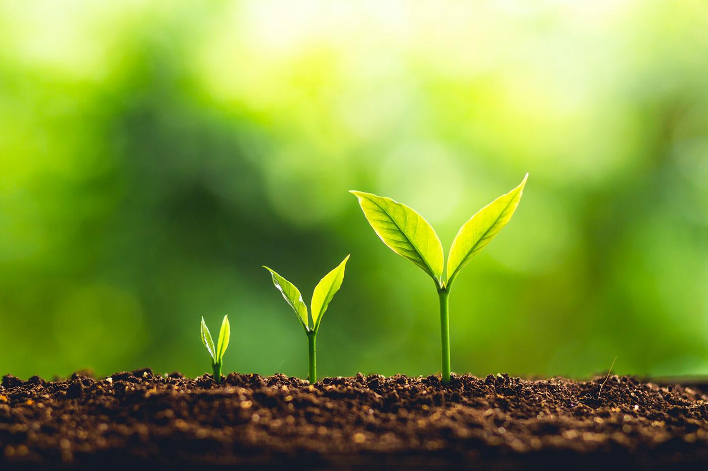 Le développement personnel du chef d'entreprise…quelle utilité ?